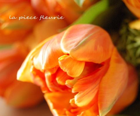 チューリップ「オレンジプリンセス」