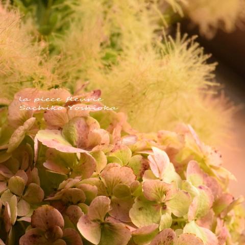 秋色アジサイとスモークツリー